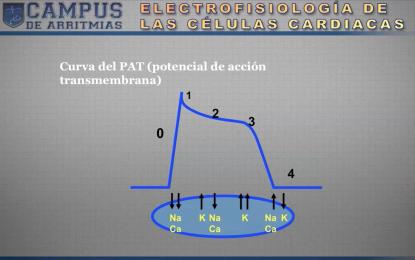 Curso de ECG: Electrofisiología de las células cardíacas